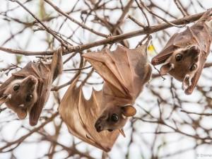 Bat takes flight