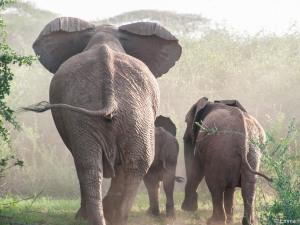 Elephants Going