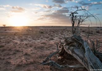 Where the Cheetahs sit, Koroli Desert