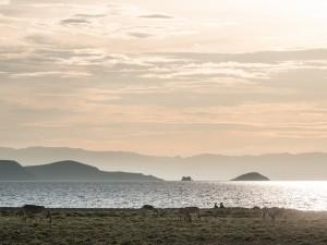 Donkeys by Lake Turkana