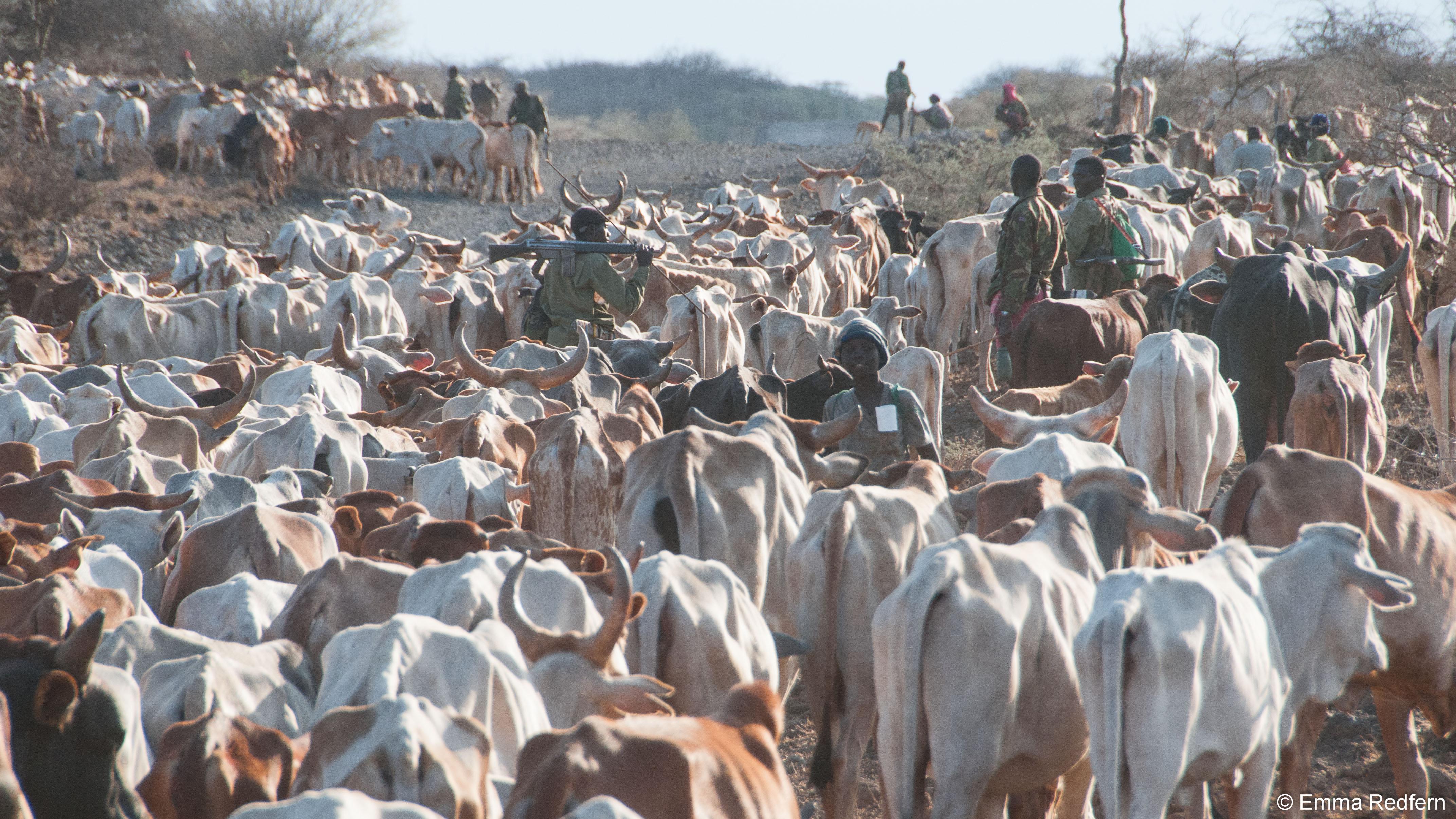 Moving Livestock