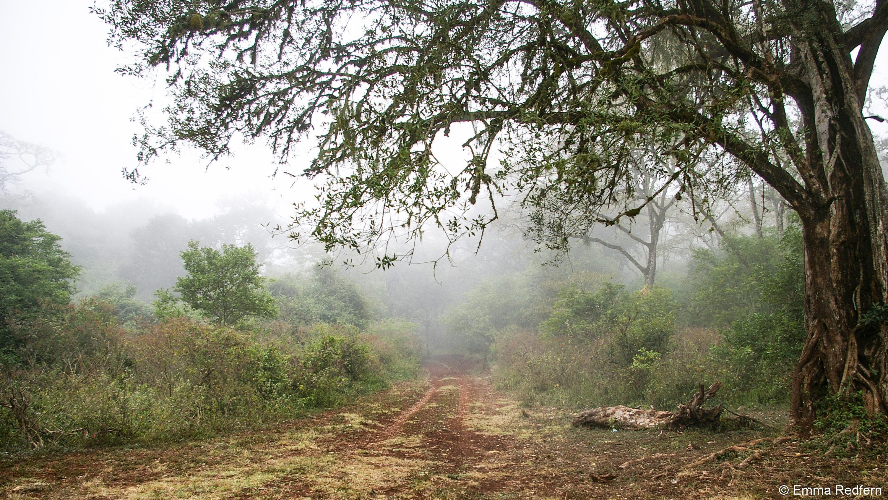 Mist over Marsabit Forest