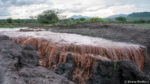 The tragedy of rain on degraded rangelands